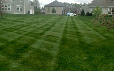 6 Step Lawn Care Program